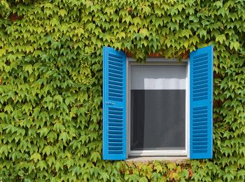 Moustiquaire sur fenêtre